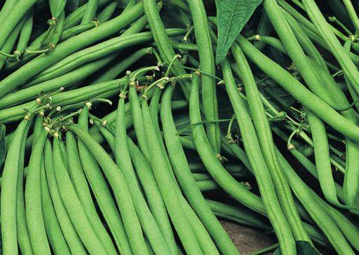 French Beans - Advocacy and Lobbying