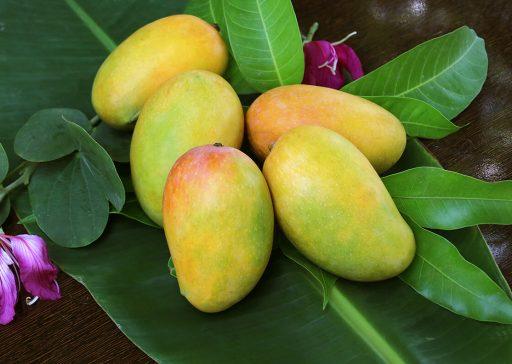 Mango - Capacity Building